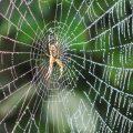 De pareltjes op je spinnenweb