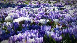 Iets moois komt tot bloei