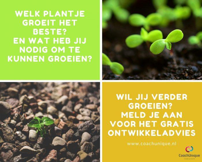 plantjes en vraag welke plant het beste groeit en wat jij nodig hebt om te groeien